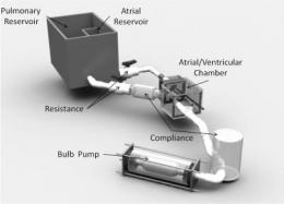 First in vitro study of tricuspid valve mechanics uncovers causes for leakage