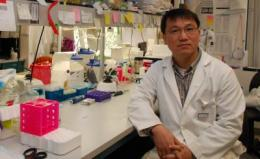 Mitochondria restructuring protein provides new therapeutic target for heart disease