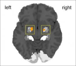 Amygdala detects spontaneity in human behavior