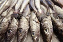 Eating fish can reduce the risk of diabetes
