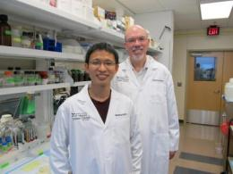 Mouse study turns fat-loss/longevity link on its head