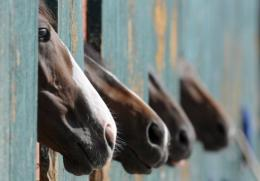 Officials at Randwick, Sydney's best known racecourse, have warned trainers to be alert for symptoms of the Hendra virus