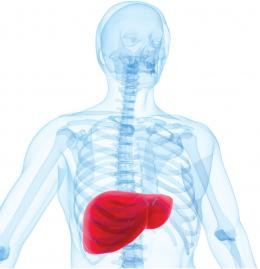 Pinpointing a tell-tale mark of liver cancer