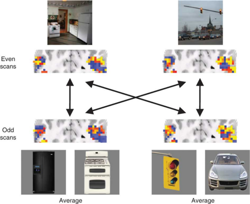 Researchers utilize neuroimaging to show how brain uses objects to recognize scenes