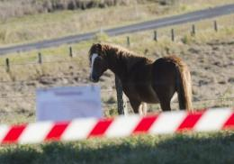 So far 14 horses have died or been put down in Australia since June as a result of the Hendra virus