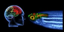 Toward a therapy to healing stroke