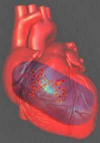Viagra against heart failure: Researchers throw light on the mechanism