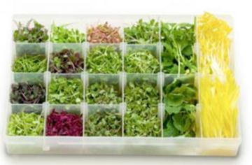 Microgreens: Tiny, but powerful