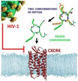 Potential drug molecule shows enhanced anti-HIV activity