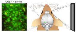 Single-neuron observations mark steps in Alzheimer's disease