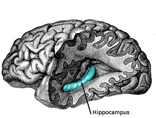 Unlocking a major secret of the brain