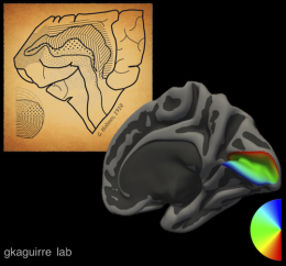 Researchers create a universal map of vision in the human brain