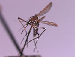 West Nile virus: Be smart, don't panic