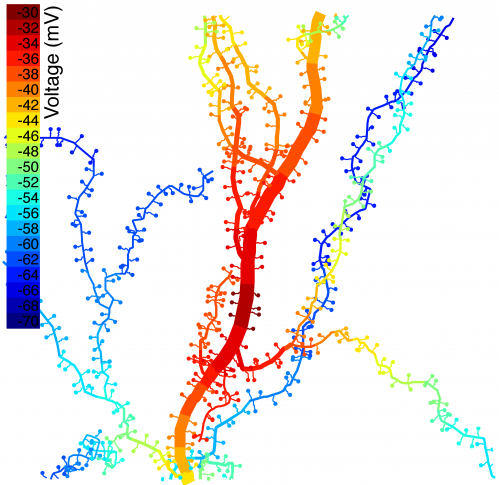 After 100 years, understanding the electrical role of dendritic spines