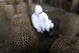 Bird flu claims 9th victim in Indonesia this year
