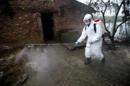 Bird flu still a menace in Asia and beyond (AP)