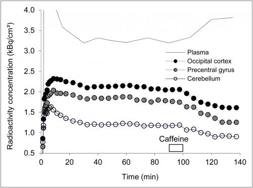 Caffeine's effect on the brain's adenosine receptors visualized for the first time