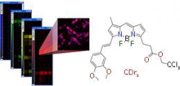 Cell biology: Lighting up neural stem cells