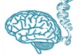 Changes in genetic function in the brain linked to Alzheimer's