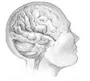 Childhood socioeconomic status affects brain volume