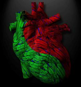 Discovery of new heart failure trigger could change the way cardiovascular drugs are made