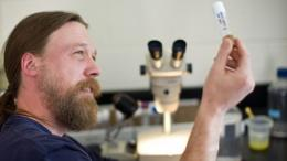 Fruit fly research might change diabetes treatment