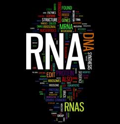 Gene regulation through non-coding RNAs