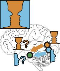Highly flexible despite hard-wiring -- even slight stimuli change the information flow in the brain