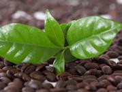 Immune suppression through cyclic plant peptides