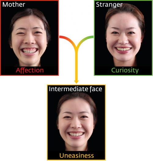 Infants show greater unease towards computer-morphed faces when shown 'half-mother' images