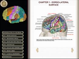 IoP Neuroscientists develop new 'Brain' App