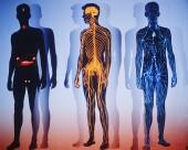 Lower limb muscle limitations hamper walking in diabetes