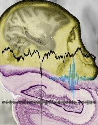 Neural interaction in periods of silence