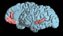 New study uncovers brain's code for pronouncing vowels