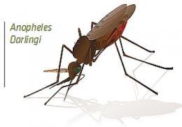 Novel anti-malarial drug target identified
