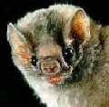 Passengers on 'Bat' plane cleared of rabies risk