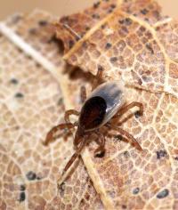 Precautions for tick-borne disease extend