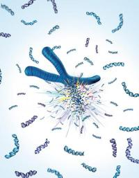 Rigged to explode? Inherited mutation links exploding chromosomes to cancer