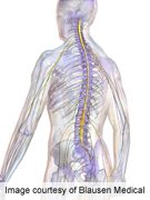 Risk factors for tracheostomy in spinal cord injury identified