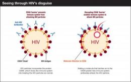 Scientists work to detach protein that HIV uses as protective shield