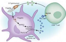 Secrets of immune response illuminated in new study