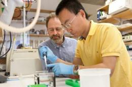 Study finds molecular switch that controls liver glucose production, may offer target for type II diabetes therapy