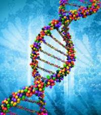 Ten new diabetes gene links offer picture of biology underlying disease