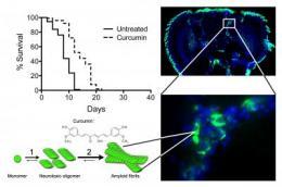 Turmeric-based drug effective on Alzheimer flies