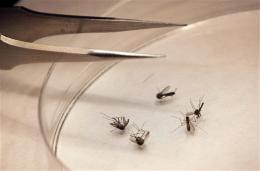 US: Alarming increase seen in West Nile cases