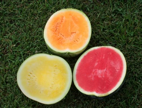 Watermelon shown to boost heart health, control weight gain in mice