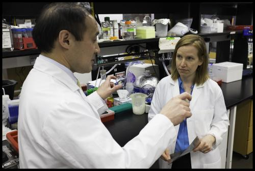 Researchers identify protein that reverses some effects of aging in mouse hearts