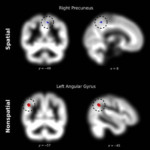 Brain structure shows affinity with numbers