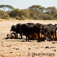 Better understanding of diseases devastating African communities