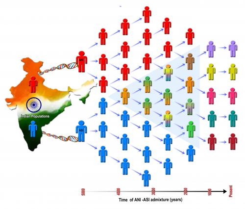 Genetic analysis reveals historic demographic change that shaped today's population in India